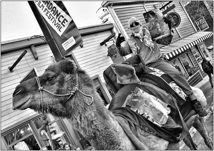 Egypt Through The Glass Shop promo camel at Sundance